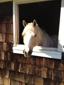 Boulder Brook.Horse