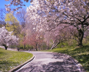 BotanicalGardens.Walkway.CherryBlossoms 6.2016