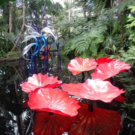 Chihuly.Persians in thePond.Herons in Conservatory.pammy