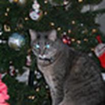 Juelez Christmas