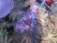 Juelez in Christmas Tree